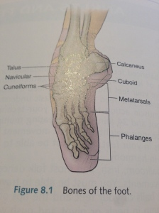 Bones of the feet